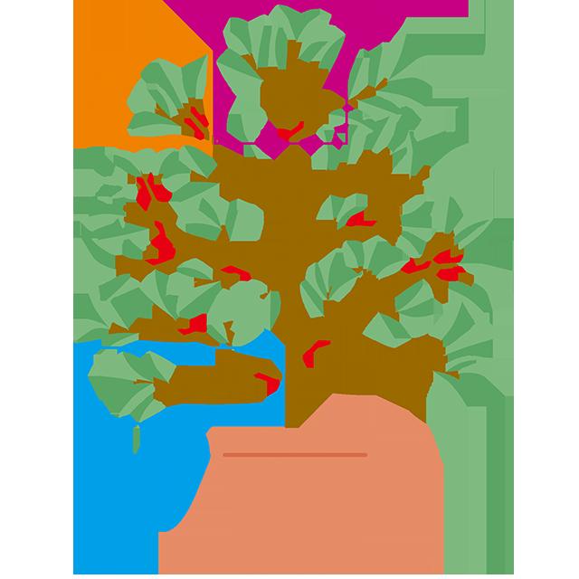の 方 育て 木 びわ の