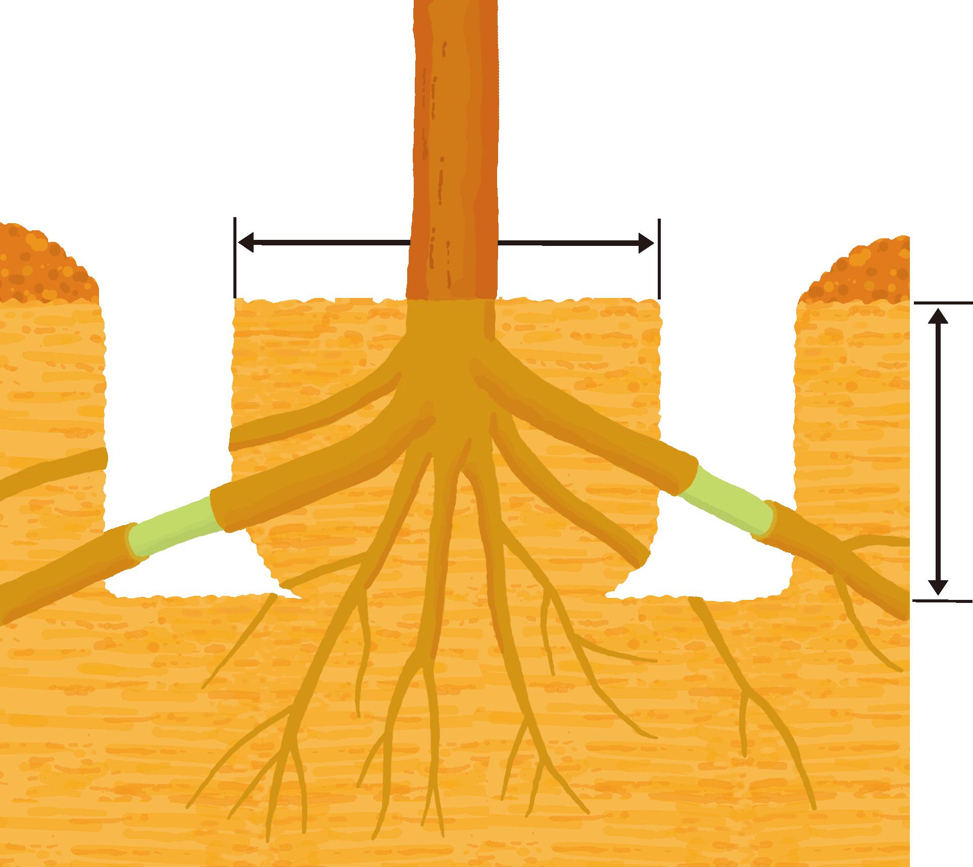 花木や庭木の移植|住友化学園芸