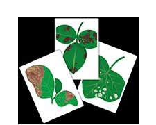 植物に発生する病気